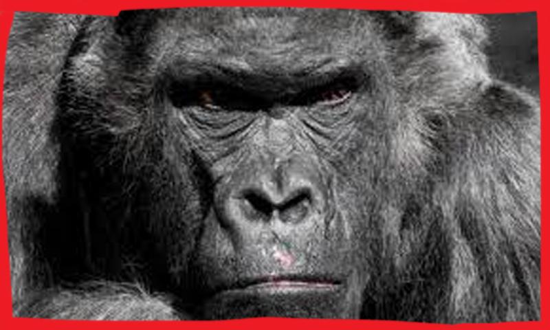 M2 – Pourquoi tu dis rien, Koko?